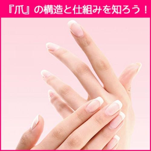 オシャレにも健康の為にも『爪』の構造と仕組みを知っておく!!