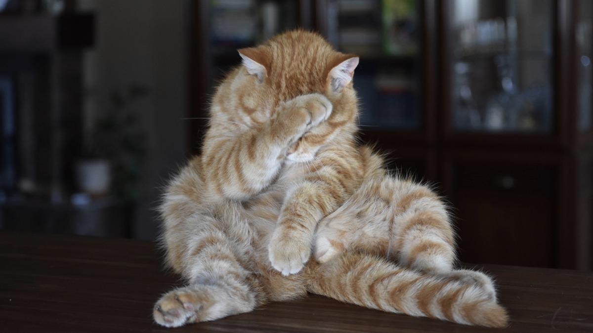 猫背のデメリットと超おすすめ改善方法!姿勢を治す理由が必要!?3